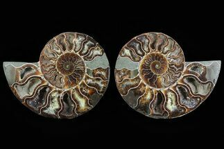 "Buy 5"" Cut & Polished Ammonite Pair - Agatized - #78568"