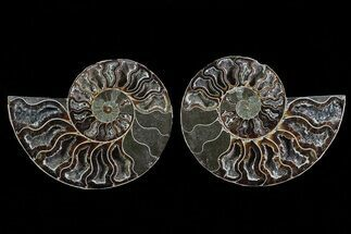 "4.3"" Cut & Polished Ammonite Pair - Deep Crystal Chambers For Sale, #78563"