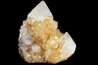 "Buy 1.8"" Sunshine Cactus Quartz Crystal Cluster - South Africa - #80203"