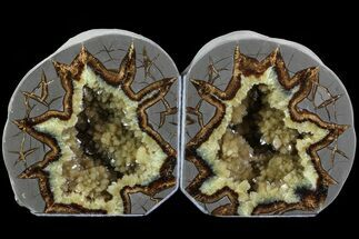 Septarian - Fossils For Sale - #80520
