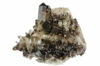 "6.1"" Dark Smoky Quartz Crystal Cluster - Brazil For Sale, #80180"