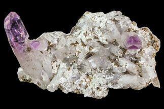 "2.2"" Amethyst Cluster - Las Vigas, Mexico For Sale, #80621"