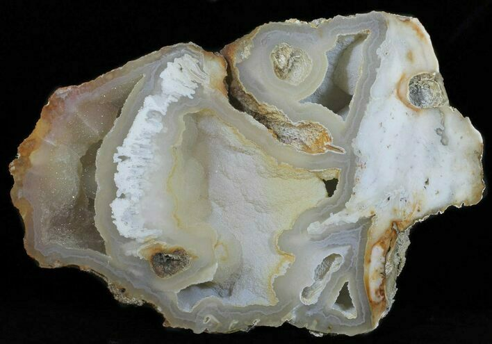 "13.3"" Agatized Fossil Coral With Druzy Quartz - Florida"