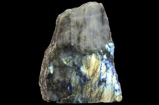 "Buy 5.2"" Tall, Single Side Polished Labradorite - Madagascar - #81391"