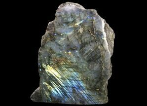 "Buy 5.4"" Tall, Single Side Polished Labradorite - Madagascar - #81394"