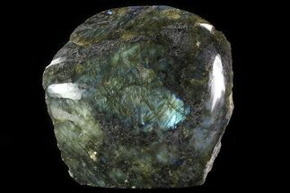 "6.9"" Wide, Single Side Polished Labradorite - Madagascar For Sale, #81398"