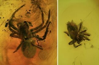 2 Detailed Fossil Spiders (Aranea) In Baltic Amber For Sale, #81674