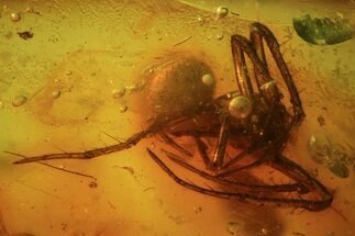 Detailed Fossil Spider (Aranea) In Baltic Amber For Sale, #81725