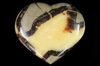 Septarian - Fossils For Sale - #82029