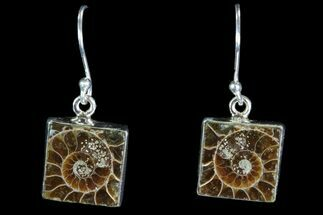 Buy Fossil Ammonite Earrings - Sterling Silver - #82258