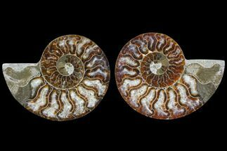 "Buy 3.5"" Cut & Polished Ammonite Pair - Agatized - #82267"
