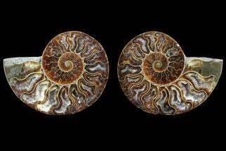 "3.4"" Cut & Polished Ammonite Pair - Agatized For Sale, #82280"