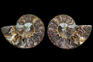 "Buy 3"" Cut & Polished Ammonite Fossil - Agatized - #82303"