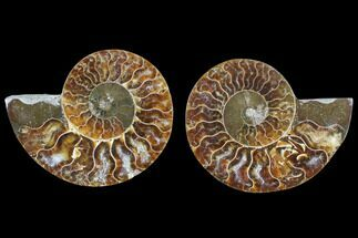 "Buy 2.9"" Cut & Polished Ammonite Fossil - Agatized - #82306"