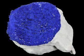 Azurite - Fossils For Sale - #82662