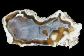 "4"" Agatized Fossil Coral Geode - Florida For Sale, #82813"