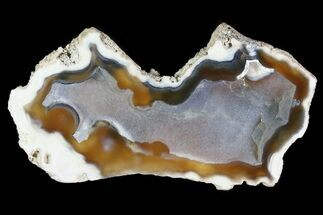 "3.8"" Agatized Fossil Coral Geode - Florida For Sale, #82814"