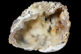 "3.5"" Agatized Fossil Coral Geode - Florida For Sale, #82987"