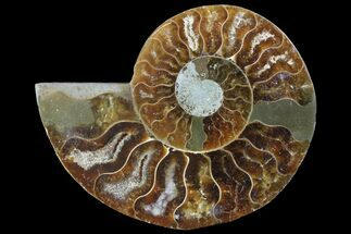 "Buy 2.8"" Agatized Ammonite Fossil (Half) - Madagascar - #83869"
