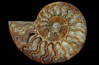 "3.4"" Agatized Ammonite Fossil (Half) - Madagascar For Sale, #83831"