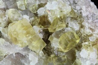 Fluorite - Fossils For Sale - #84240