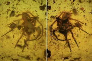 Detailed Fossil Spider (Aranea) In Baltic Amber For Sale, #84605