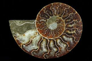 "Buy 3.8"" Agatized Ammonite Fossil (Half) - Madagascar - #83851"