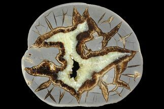 "Buy 5.2"" Polished Septarian Slab - Utah - #85150"