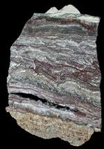 Microbial Mat - Fossils For Sale - #50757