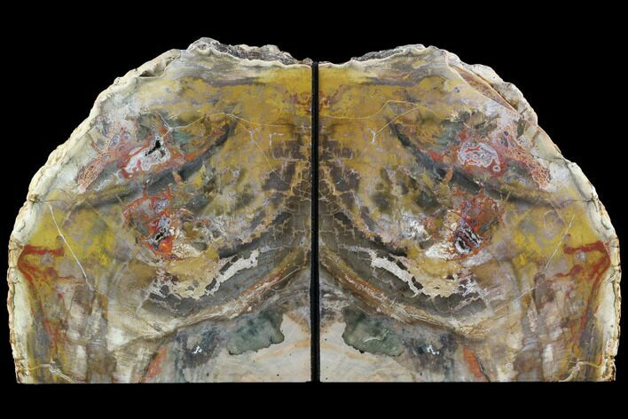 "7.3"" Tall, Colorful Petrified Wood Bookends - Madagascar"