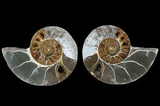 "3.5"" Cut & Polished Ammonite (Anapuzosia?) Pair - Madagascar For Sale, #88016"