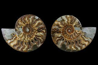 "6.25"" Cut & Polished Ammonite Pair - Agatized For Sale, #88172"