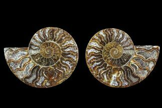"Buy 4.2"" Cut & Polished Ammonite Fossil - Crystal Chambers - #88210"