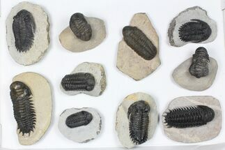 Various - Fossils For Sale - #84738
