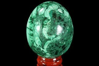 "Stunning 2.25"" Polished Malachite Egg - Congo For Sale, #89678"
