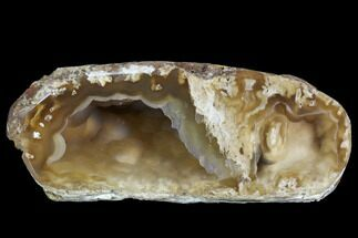 "3.6"" Agatized Fossil Coral Geode - Florida For Sale, #90213"