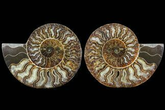 "Buy 5.8"" Cut & Polished Ammonite Fossil - Agatized - #91156"