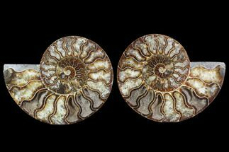 "5.75"" Cut & Polished Ammonite Fossil - Agatized For Sale, #91166"
