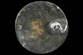 "4.2"" Round Fossil Goniatite Dish For Sale, #91481"