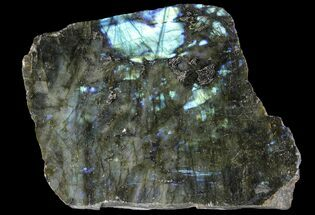 "Buy 7.9"" Wide, Single Side Polished Labradorite - Madagascar - #92065"