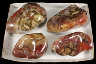 Buy Wholesale Lot: 24 Lbs Polished Petrified Wood - 4 Pieces - #92425
