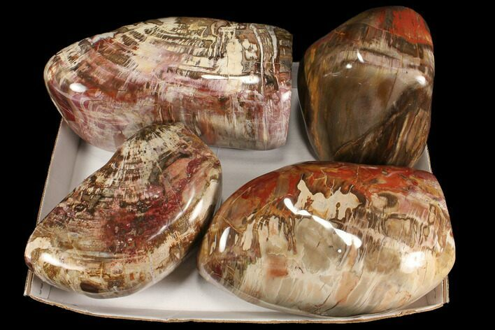 Wholesale Lot: 54+ Lbs Polished Petrified Wood - 4 Pieces