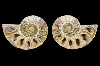 "3.6"" Cut & Polished, Agatized Ammonite Fossil - Jurassic For Sale, #93524"
