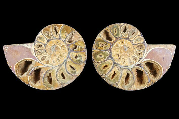 "3.6"" Cut & Polished, Agatized Ammonite Fossil - Jurassic"