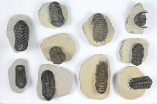 Various - Fossils For Sale - #92166