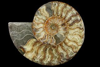 Cleoniceras - Fossils For Sale - #94203