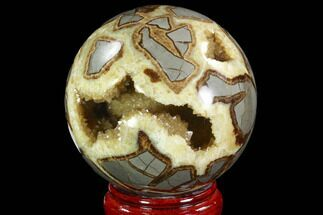 Septarian - Fossils For Sale - #94416