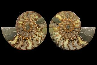 "Buy 7.6"" Cut & Polished Ammonite Fossil - Deep Crystal Pockets - #94198"