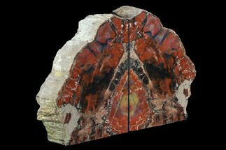 "Buy 7.9"" Tall, Arizona Petrified Wood Bookends - Red & Black - #95974"