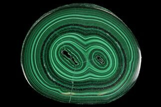 "Buy .88"" Polished Malachite Stalactite Slice - Congo - #94456"